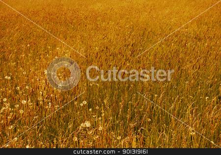 Wild flower stock photo, Wild flower meadow in Italy Trentino garden by freeteo