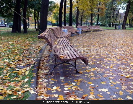 Autumn in the park stock photo, Autumn in the park by Stoyanov