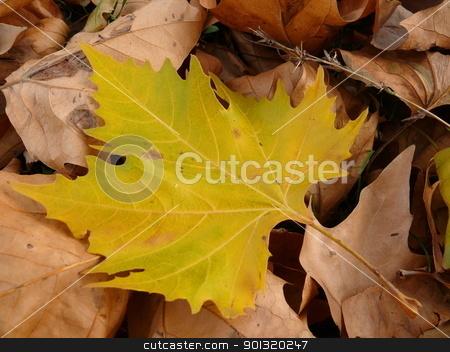 Autumn foliage background stock photo, Autumn foliage background by Stoyanov