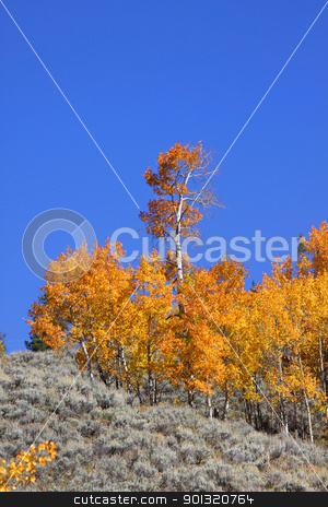 Aspens on the hill stock photo, Autumn aspen trees on the hill against blue sky by Sreedhar Yedlapati