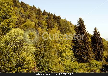 Forest green stock photo, Forest green alpine by freeteo