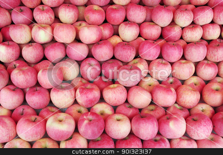 Apple stock photo, Piles of ripe red apples in autumn by John Young
