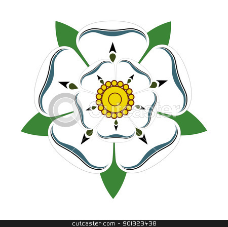 White rose of Yorkshire stock photo, White Rose of Yorkshire isolated on plain background. by Martin Crowdy