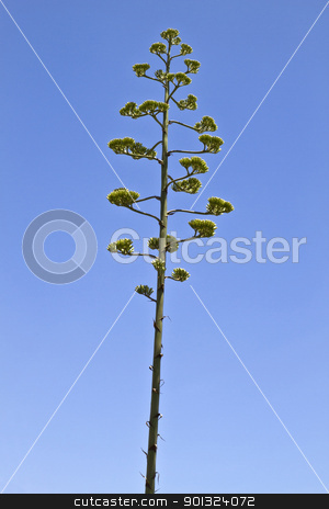 Tree stock photo, Beautiful tree closeup in the sky by Ingvar Bjork