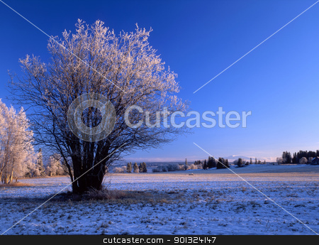 winter landscape  stock photo, Winter landscape with frost trees and blue sky by Ingvar Bjork
