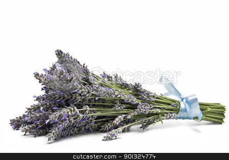 Lavender. stock photo, A bouquet of lavender isolated on a white background. by angelsimon