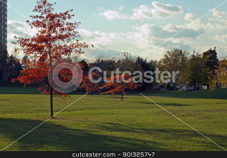 Red leaves stock photo, Red leaves on green grass at sunset by Pavel Cheiko