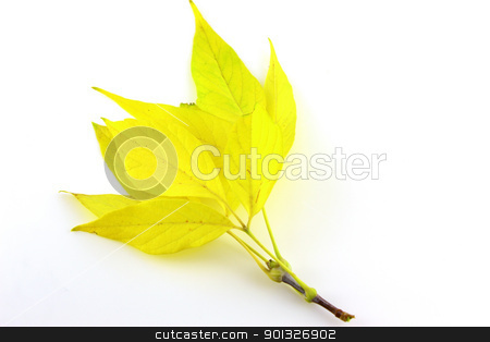 Twig with autumn leaves stock photo, Twig with autumn leaves by Sergei Devyatkin