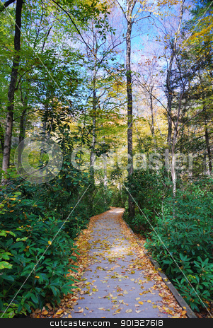 Autumn hiking trail stock photo, Autumn hiking trail with foliage in woods. From Bushkill Falls, Pennsylvania. by rabbit75_cut