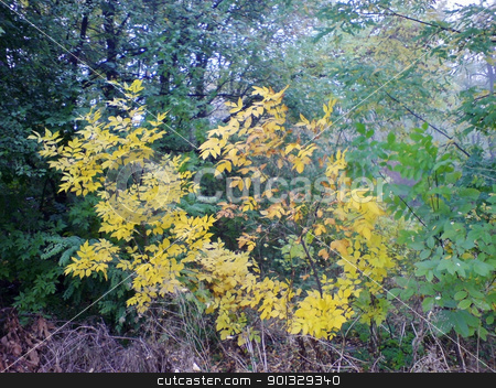 Green and yellow leaves. The fall coming stock photo, Green and yellow leaves. The fall coming by sculler