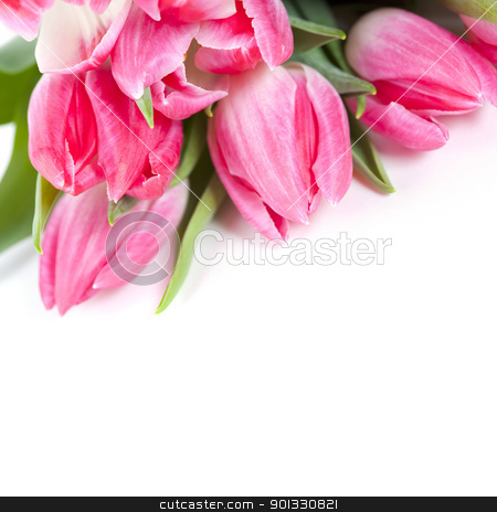 Pink tulips stock photo, Pink tulips on white background  by klenova
