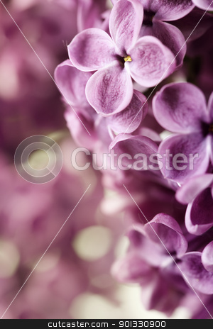 Spring Lilac stock photo, close-up beautiful lilac background by klenova