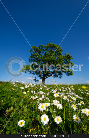 Daisy flowers and tree stock photo, Dandelion and daisy flowers with a tree in the background. by Lars Christensen
