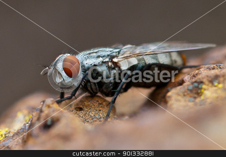 Friendly Fly stock photo, Such a cheerful, friendly and relaxed looking fly...   Hawthorn, Melbourne, Australia by Ben Cordia