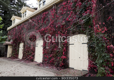 Stable Doors stock photo, A stable with several wood doors and covered with red ivy by Kevin Tietz