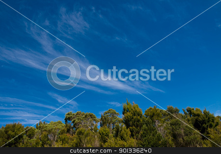 Blue sky with clouds above a forest. stock photo, Blue clear sky with feather clouds above a forest. by Ulrich Schade