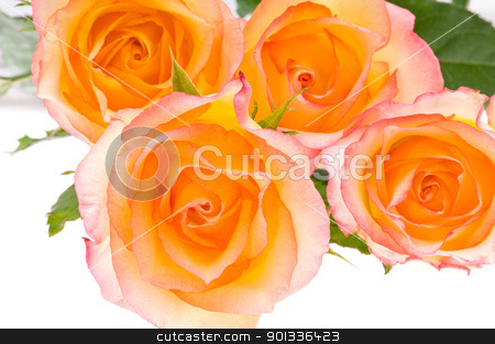 4 roses over white stock photo, 4 yellow red roses over white for decoration usage by Ulrich Schade