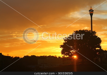 Lamp sunset stock photo, A tree, a lamp and an exciting sunset in Alamo Square by willeye