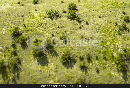 landscape imagination stock photo, overgrown bark detail looking like a aerial view of a green landscape by prill