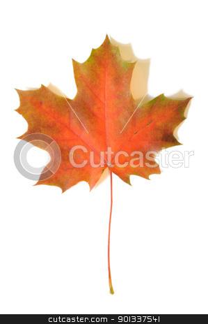 Autumn maple leaf stock photo, Yellow autumn maple leaf with soft shadows on white background by Iryna Rasko