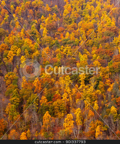 Colorful fall foliage on hillside stock photo, Autumn trees and colorful leaves on a hillside in the fall by Steven Heap
