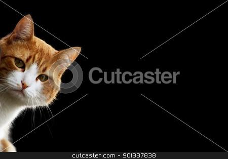 Tomcat stock photo, Playful kitten in wait for prey position  by Viktor Thaut