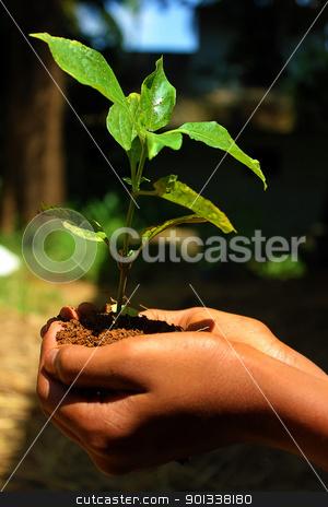 Holding small plant stock photo, Holding small plant by ajithclicks
