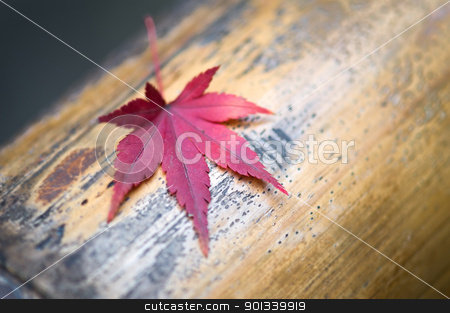 Red leave on a bamboo body stock photo, Red leave on a bamboo body close up shoot by Ulrich Schade