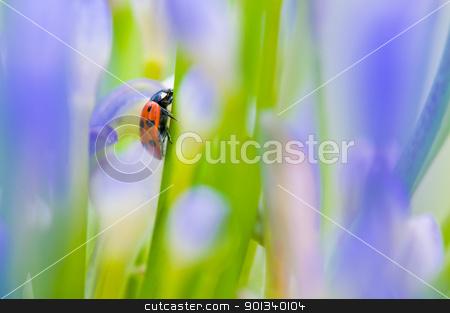 Close up shoot of a ladybug stock photo, Close up shoot of a ladybug in a summer flower by Ulrich Schade