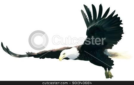 Flying Bald Eagle stock photo, Flying Bald Eagle - colored illustration by derocz