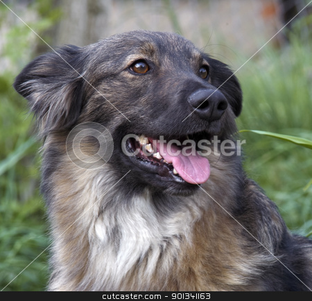dog portrait stock photo, outdoor portrait of a dog in natural ambiance by prill