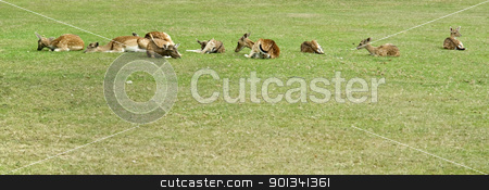 resting deers stock photo, some resting deers in green pasture by prill