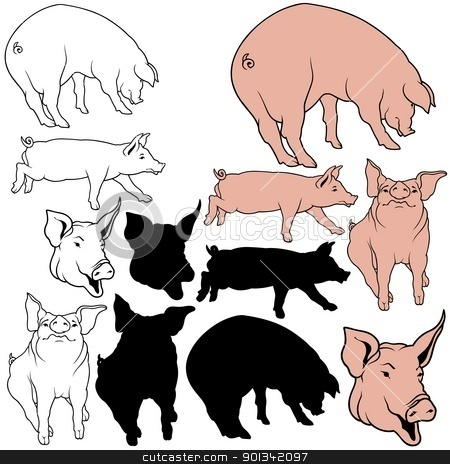 Pig Collection stock photo, Pig Collection - animal illustrations by derocz