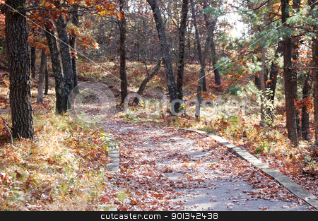 Path into forest stock photo, Path into forest by Liane Harrold