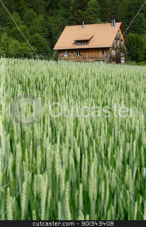 House in the wheat field stock photo, A selective focus image of a house off in the distance of a wheat field in the beginning of summer.  House is in a small rural area of Switzerland.  Focus is on the house. by © Ron Sumners