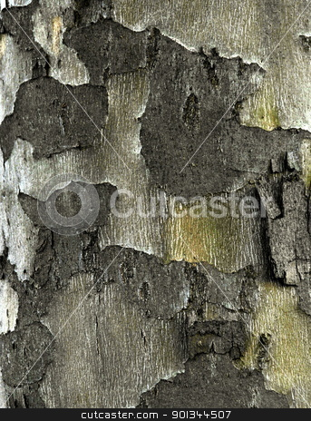 Surface Structure stock photo, Close- up of the bark of a sycamore tree by JohnL