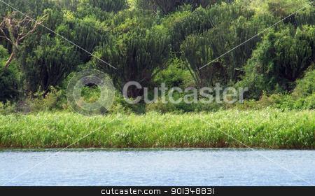 around Kazinga Channel in Uganda stock photo, waterside scenery around the Kazinga Channel in Uganda (Africa) by prill