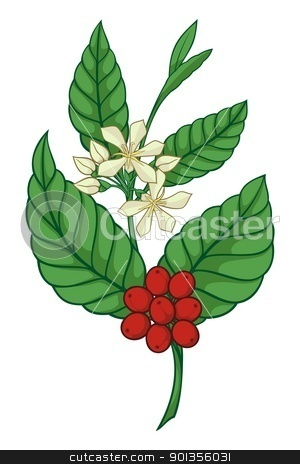 Coffee tree icon stock vector clipart, A branch of coffea tree isolated on white background. by fractal.gr