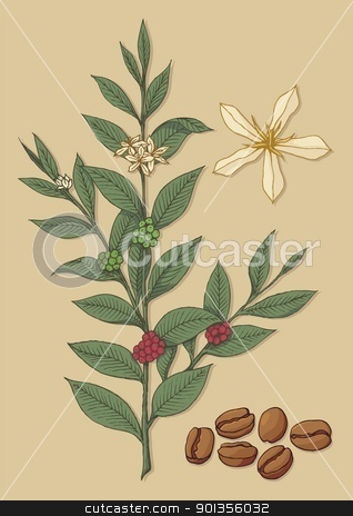 Coffee tree stock vector clipart, A branch of coffee tree with flower and beans on beige background. by fractal.gr