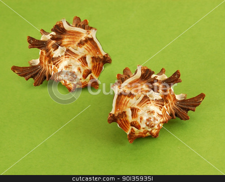 Sea shells stock photo, large sea shells over green background by Julija Sapic