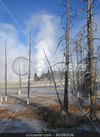 Yellowstone National Park stock photo, mystic Yellowstone National Park scenery (USA) with dead trees and scary landscape in sunny ambiance by prill