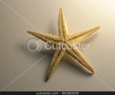starfish stock photo, studio photography ofa yellow illuminated starfish un white paper back by prill