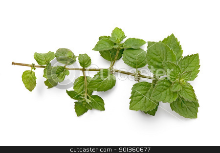 A green sprig of mint stock photo, A green sprig of mint isolated on white background by rezkrr