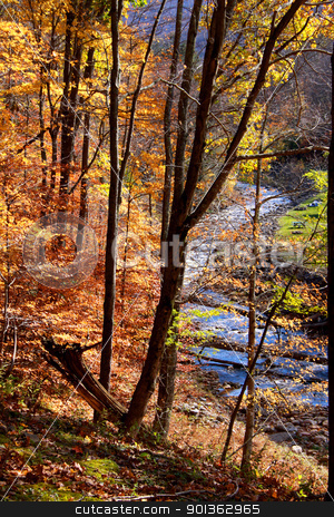 Forest stream stock photo, Stream flowing through colorful woods in autumn time by Sreedhar Yedlapati