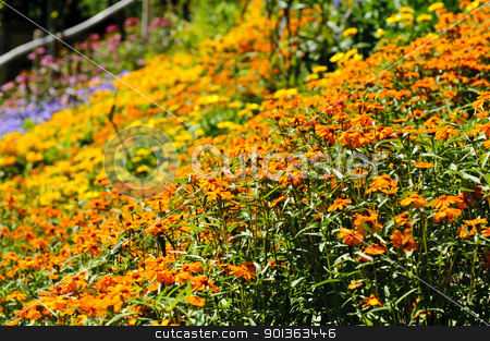 Wild flowers background stock photo, Field full of fresh and colorful wild flowers by Alessandro Rizzolli