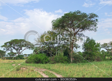 Queen Elizabeth National Park in Africa stock photo, sunny scenery in the Queen Elizabeth National Park in Uganda (Africa) with fied path and vegetation by prill