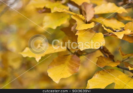 yellow autumn leaves stock photo, detail of a twig with yellow and brown autumn leaves in blurry back by prill