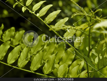 sunny illuminated summer leaves stock photo, fresh green leaves at summer time by prill