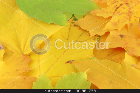 Abstract background with autumn leaves stock photo, Abstract background with autumn leaves by Sergei Devyatkin