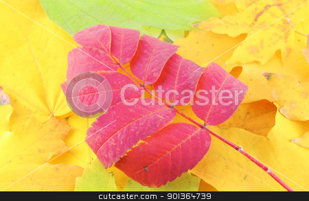 Abstract background with color autumn leaves stock photo, Abstract background with color autumn leaves by Sergei Devyatkin